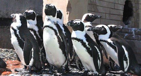Penguin pavilion at Long Island Aquarium: Where to take your toddler on Long Island