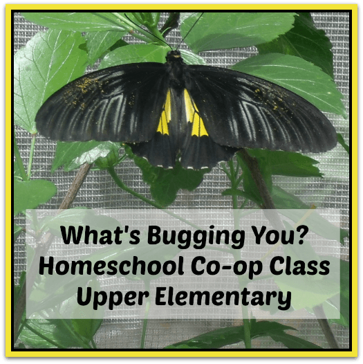 Homeschool Co-op Class Ideas- Over 50 Classes Your Co-op Needs homeschool co-op class ideas